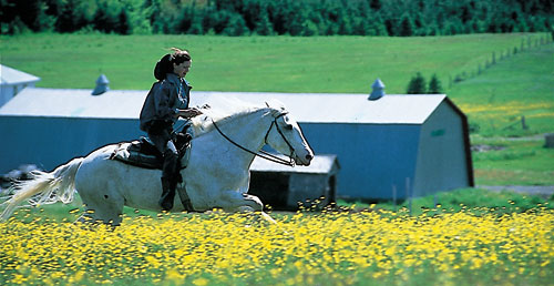 Horse riding vacations in Quebec