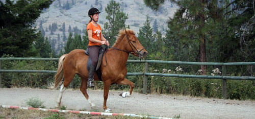 Horse riding trips on Gaited Horses