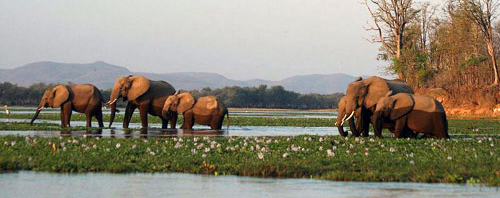 Wildlife Safari vacation tours