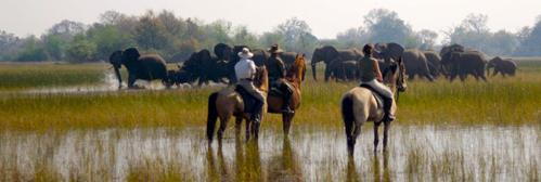 On horseback in the delta with Hidden Trails
