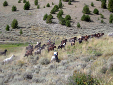 USA-Idaho-Medicine Lodge Horse Drive