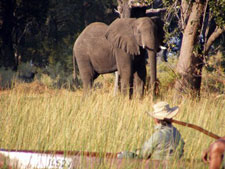Botswana-Okavango Delta-Okavango Big Five Safari