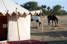 India-Rajasthan-Pushkar Fair Riding Safari in Rajasthan