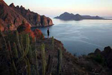 Mexico-Baja-Sea of Cortez Islands & Whale Watching