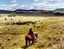 Big Belt Cattle Drive