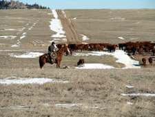 USA-Wyoming-Two Creek Ranch Cattle Drive
