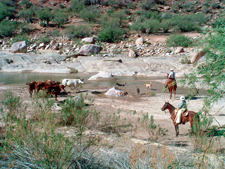 Hassayampa River Working Ranch