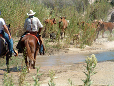 USA-Arizona-Hassayampa River Working Ranch