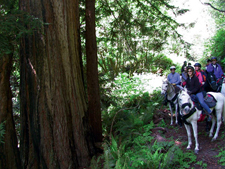 USA-California-Redwood Coast Ride