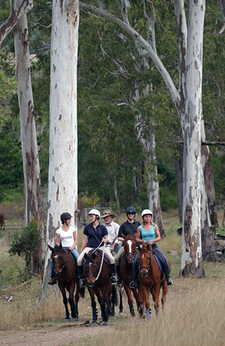 Australia-Queensland-Gold Rush Trail and  Beach Ride