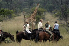 Botswana-Mashatu-Land of the Giants - Tuli Riding Safari