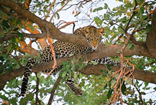 Botswana-Mashatu-Land of the Giants - Mashatu Deluxe Safari