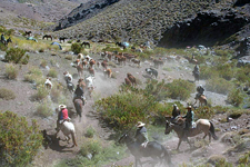 High Andes Cattle Drive