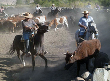 Chile-Central-High Andes Cattle Drive