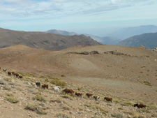 Argentina-Salta-Inca Trails Cattle Drive