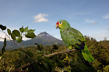 Costa Rica-Arenal-Arenal Volcano & Waterfall Horse Journeys