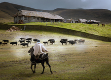 Ecuador-Highlands Riding Tours-Highlands Cattle & Horse Round Up in Ecuador