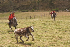 Ecuador-Highlands Riding Tours-Historic Cattle Round Up