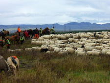 Iceland-Iceland Shorts-Sheep Round-Up on Horseback