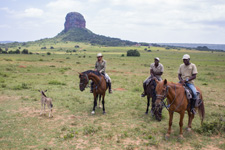 South Africa-Waterberg-Waterberg Big 5 Adventure