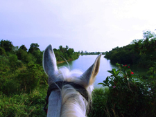 Thailand-Thailand-Pattaya Equestrian Retreat