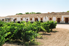 Spain-Central Spain-Vineyard Trail - Ruta del Vino