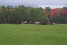 USA-Vermont-Vermont Equestrian Clinic