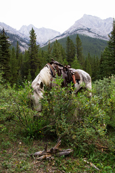 Canada-Alberta-Banff  - Backcountry Lodge Ride - 3 days