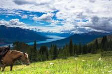 Canada-British Columbia-Chilko Explorer and Pack Trip Combo