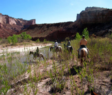 Utah Equestrian Holidays Grand Canyon Colorado Plateau Usa