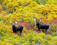 Canada-Yukon-Yukon Wilderness Horseback Expedition