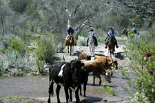 USA-New Mexico-Gila Cattle Round Up