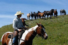 Canada-Alberta-Porcupine Hills Working Ranch