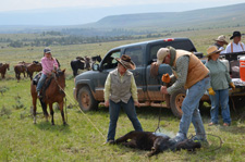 USA-Wyoming-Pryor Mountains Working Ranch