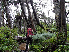 Canada-British Columbia-West Coast Trail - backpacking