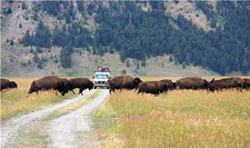 USA-Wyoming-Grand Teton and Yellowstone Multi-Sport