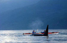 Canada-British Columbia-Johnstone Straight Sea Kayaking