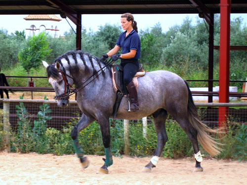 http://www.hiddentrails.com/_templateresources/images/gallery_500/IT-SPSR30C/00_spain_andalusia_epona_riding_center2.jpg