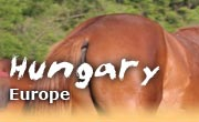 Horseback riding vacations in Hungary