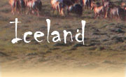 Horseback riding vacations in Iceland, West