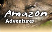 Amazon vacations in Ecuador, Amazon