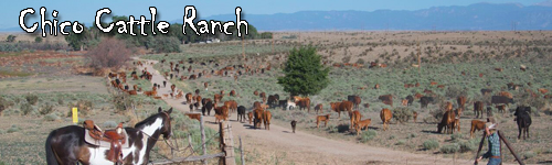 Chico Cattle Ranch
