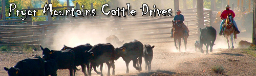 Pryor Mountains Cattle Drives