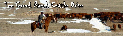 Two Creek Ranch Cattle Drive