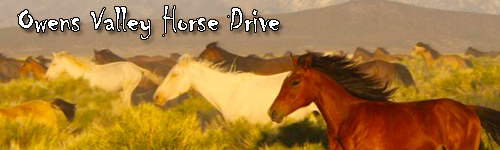Owens Valley Horse Drive