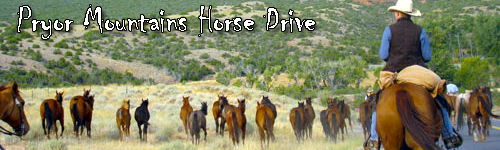 Pryor Mountains Horse Drive
