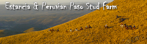 Estancia & Paso Stud Farm at San Pedro Norte