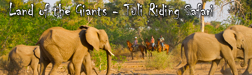 Land of the Giants - Tuli Riding Safari