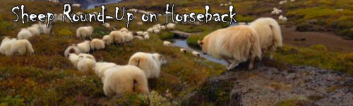 Sheep Round-Up on Horseback