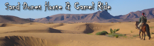Sand Dunes Horse & Camel Ride